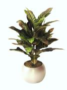 600mm Artificial Croton Plant