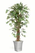 1600mm Artificial Ficus Plant