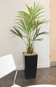 5ft Artificial Kentia Palm Tree in Black Kubis Pot