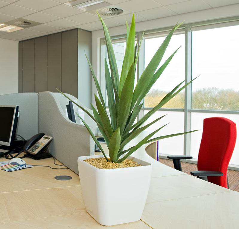 Artificial Yucca Plant In A Square White Pot Office